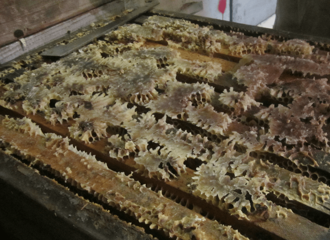 gallery-hislops-production-honey-bees-new-zealand